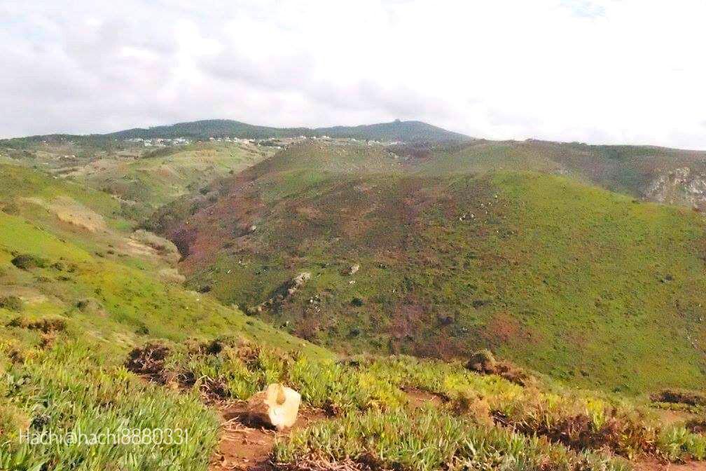 ロカ岬の景色、海の反対は山